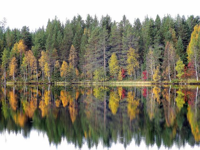 l'automne en Finlande